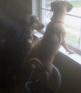 Misfit and Micki on Chipmunk Patrol