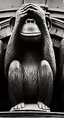 monkey no see