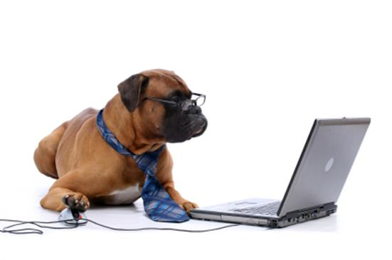 you can't teach an old dog new tricks | WordReference Forums
