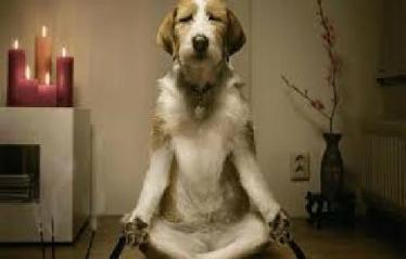 meditation pup