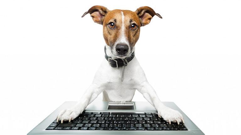 Dog writing resume