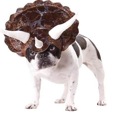 Doggone Dinosaur